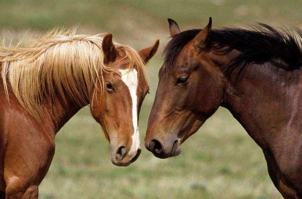 Vedovati Pisos raças-de-cavalos-1024x675
