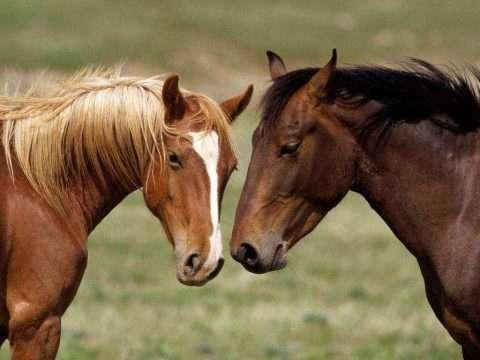 Como cuidar de cavalos: Preparamos um guia completo para você!