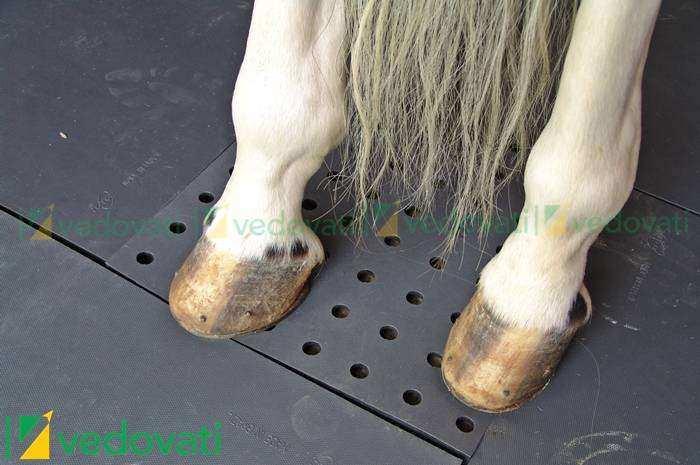 Pisos para Cavalos