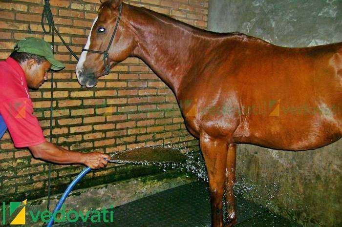 EBV-30 Estrado de Borracha Vedovati para lavadores de cavalos