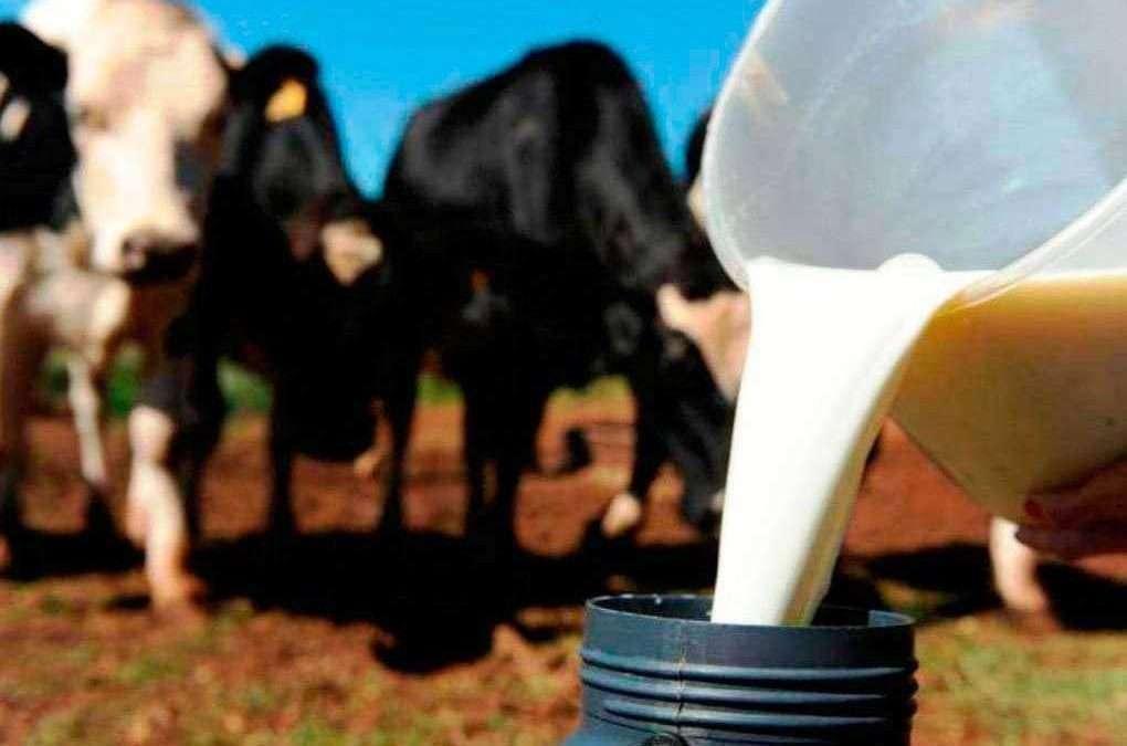 Descubra como melhorar a produção de leite e a rentabilidade da sua fazenda