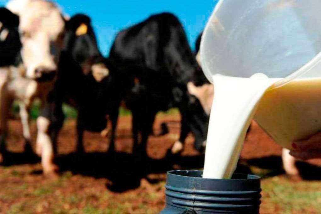 producao leite - Piso de borracha para sala de ordenha HD-15 EL
