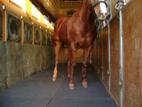 H151315 F00001 C374 2000x0 480x360 - Transporte de equinos tem regras do Contran