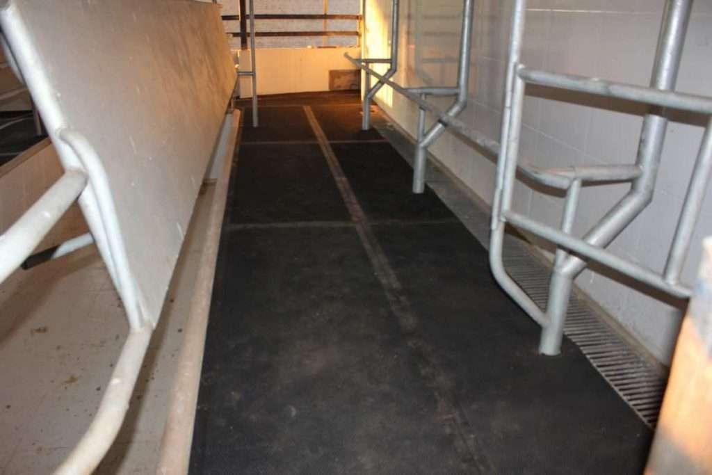 Piso de borracha para sala de ordenha 1024x683 - Qual a vantagem de usar pisos de borracha para gado leiteiro?