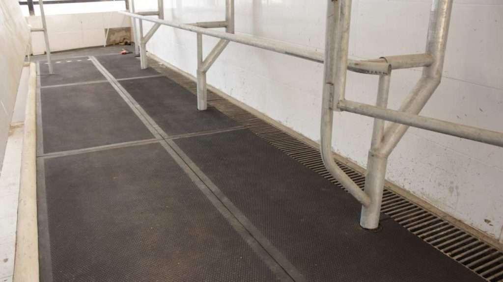 Piso de borracha para sala de ordenha detalhe 1024x575 - Qual a vantagem de usar pisos de borracha para gado leiteiro?