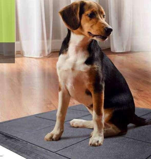 EBV 16 Dog leve - Veja o que é necessário para construir um canil doméstico