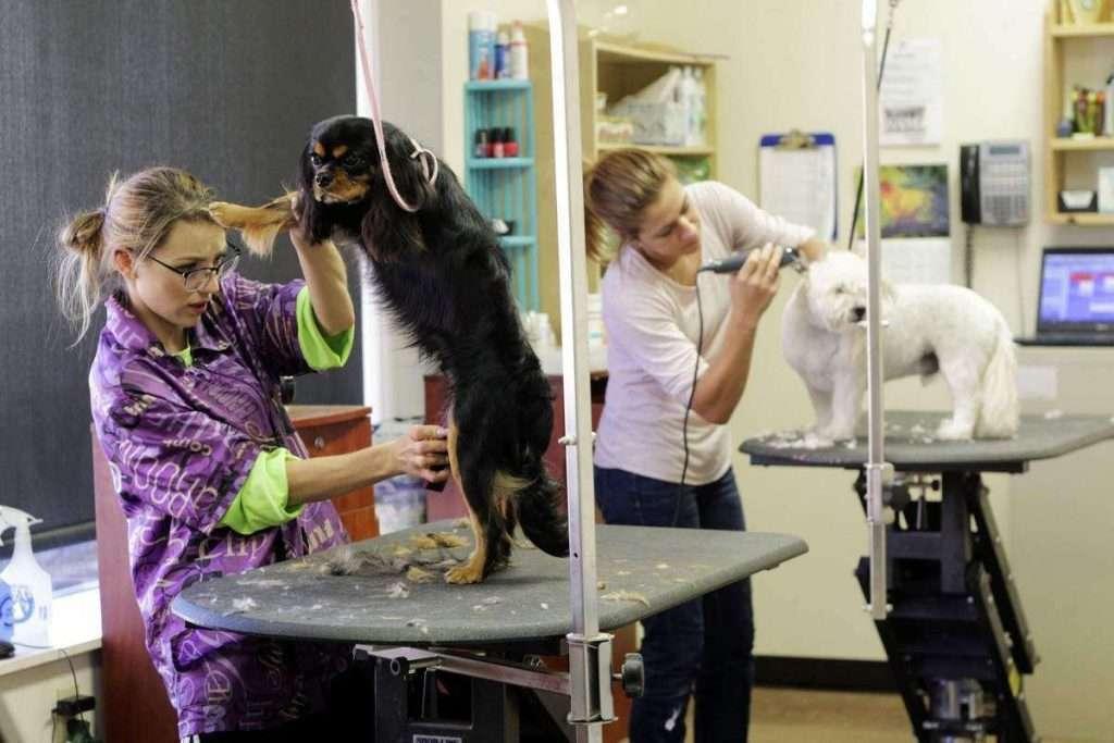 como montar um pet shop 1024x683 - Como abrir um canil profissional?