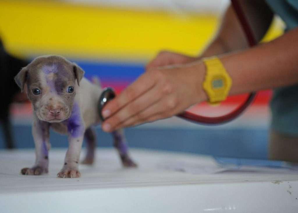Vedovati Pisos veterinario-1024x731