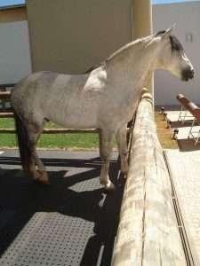 baia de cavalo 2 225x300 - Como fazer a limpeza da cocheira de cavalos corretamente
