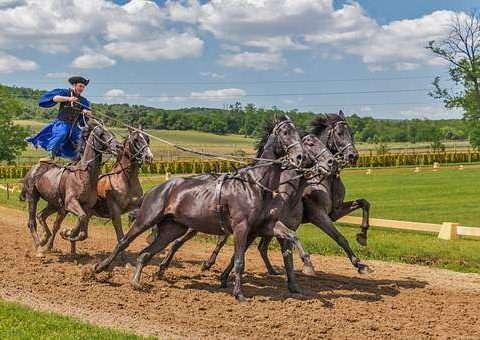 Vedovati Pisos horses-394205__340-480x340
