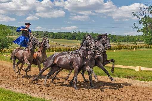 Vedovati Pisos horses-394205__340