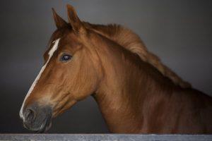 raças de cavalos