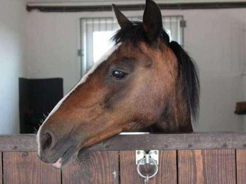 Cocheira para Cavalo