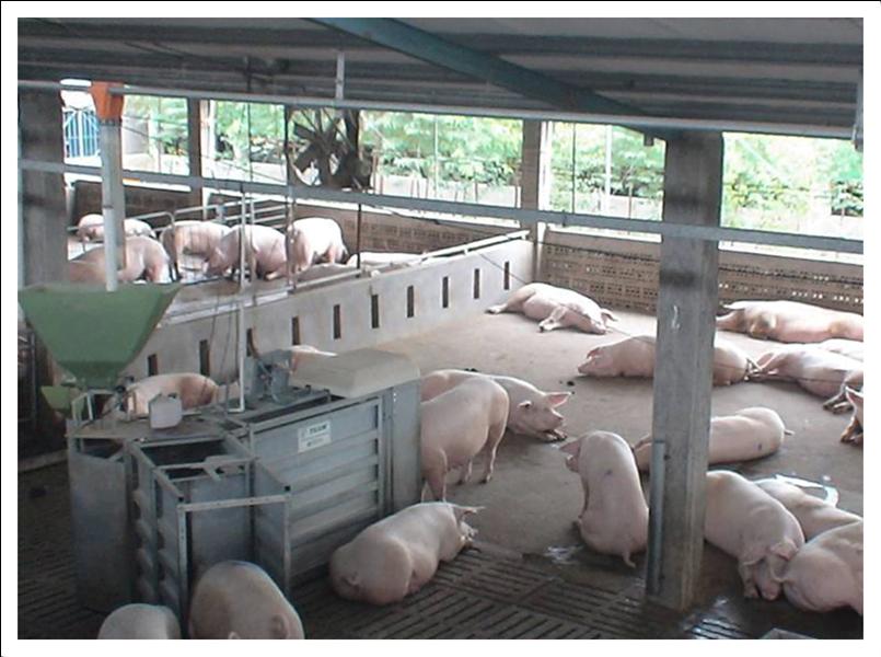 Gestação coletiva 3 - Piso de borracha para transporte de suínos HD-15 EL