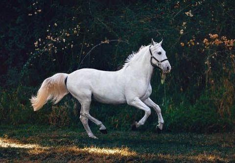 cavalo saudável