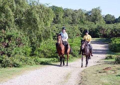 Vedovati Pisos esporte-com-cavalos-480x340