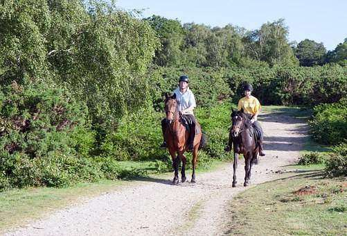 esporte com cavalos - Tapete de borracha para transporte de cavalos HD-12 BOL