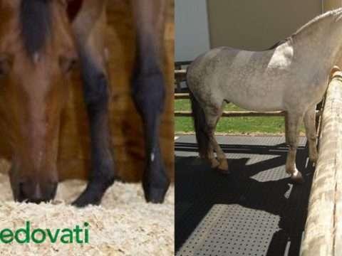 img vedovati post 03 480x360 - Cama de maravalha versus cama de borracha para cavalos. Qual é a melhor?