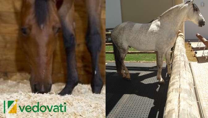 img vedovati post 03 - Cama de maravalha versus cama de borracha para cavalos. Qual é a melhor?