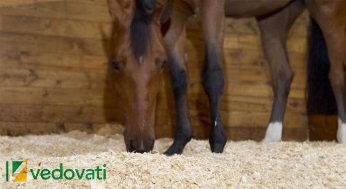 img vedovati post 04 - Cama de maravalha versus cama de borracha para cavalos. Qual é a melhor?