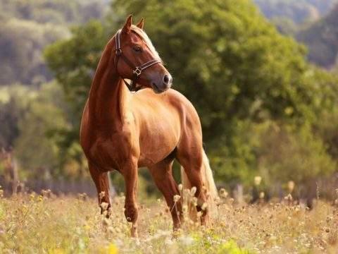 post cavalos 480x360 - Cavalo para vender? Essas dicas vão te ajudar a fazer bons negócios
