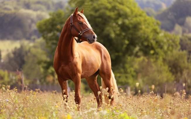 post cavalos - Cavalo para vender? Essas dicas vão te ajudar a fazer bons negócios
